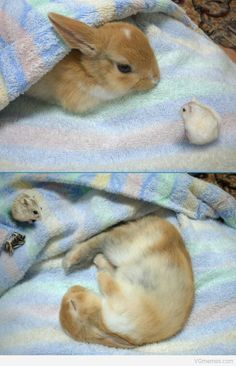 bunnies love other pets