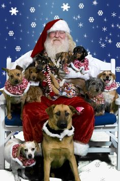 All The Dogs Visit Santa Claus