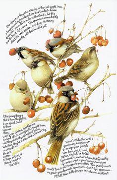 berri, marjolien bastin, bastin art, marjolein bastin, artist, birds, illustr, eye, sparrow