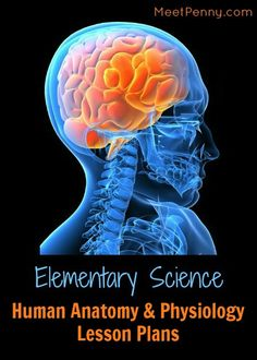 Loads of links! Elementary science lesson plans for human anatomy & physiology. Perfect for homeschool.