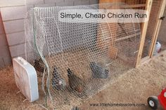 Keeping Backyard Chickens :: Hometalk
