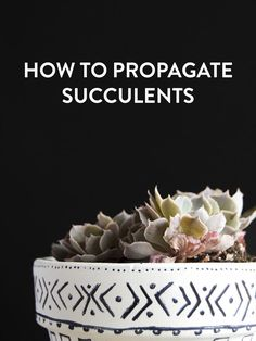 How to propagate succulents: No green thumb needed!