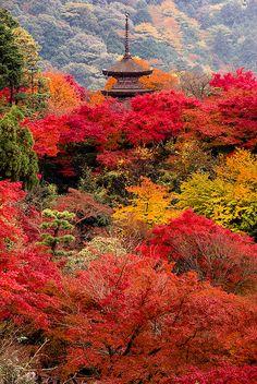 Autumn colors at Kiyomizu-dera Temple in Kyoto, Japan (by takay).