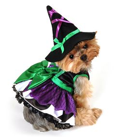 Love this Green Scary Witch Dog Costume on #zulily! #zulilyfinds