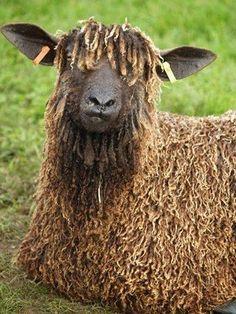 farm, goat
