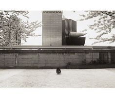 In Focus: Tokyo (Getty Center Exhibitions)