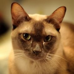 Come allontanare le pulci dai gatti in modo naturale e non tossico http://ambientebio.it/come-allontanare-le-pulci-dai-gatti-in-modo-naturale-e-non-tossico/