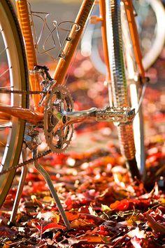 Fall bike ride <3