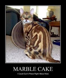 Marble Cake. I could eat a piece right about now. #catoftheday