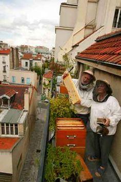 thebeephotographer bees, bee queen, urban beekeeping, rooftop beekeep, roof top, pari balconi, bee hive, honey bee