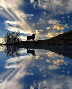 21 Brilliant Reflection Photos - find line of symmetry