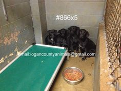 We died today. We had fosters who went to the pound to get us and were told NO. We had rescues coming for us and yet we died today. Why did the men at the pound feel like we should die? What did we do to them? Why did we die today? Why?  This is Logan County Pound in WV. This pound makes me sick!!!  This pound should be shut down. Every two weeks  they euthanize cats and dogs. These poor babies don't stand a chance being there! This is not a shelter...this is a living hell!!!