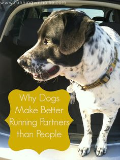 RUNNING WITH OLLIE: Why Dogs Make Better Running Partners than People - click through to read