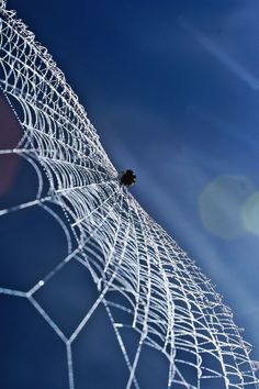Blue angles, architects, animals, spiders, spider webs, blue skies, thought, charlottes web, itsy bitsy spider