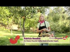 ▶ Fruit Trees - Selection Guide - YouTube - fruit trees playlist