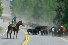 A cattle drive provides a glimpse of rural Colorado life between Lake City and Gunnison.