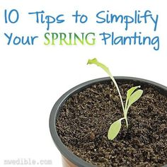 10 Tips to Simplify Your Spring Planting by Northwest Edible Life