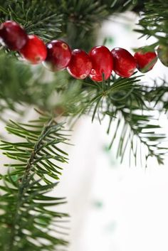 Simple Cranberry Garland for Christmas
