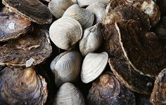 The Skinny on…Shellfish, Part II: Oysters, Clams, Scallops and More