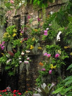 This orchid wall will be my backyard.