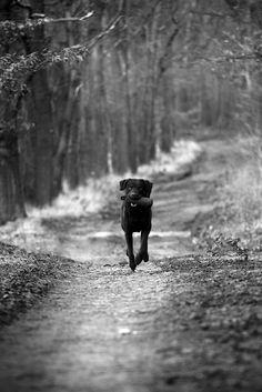 Fetch . . . good dog!