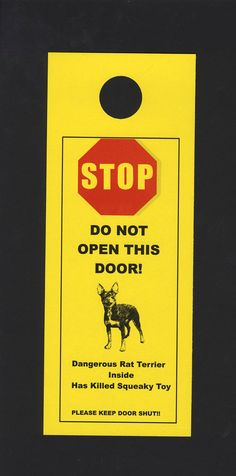 Warning!! toy rat terrier, dalmatian insid, squeaki toy, danger dalmatian, rat terrier dogs, rats, kill squeaki, thing, rat terriers