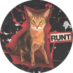 Runt CAT ART by TheEscapistArtist on Etsy, $5.00