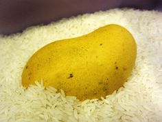 Ripen Mangoes in the Rice Bin by thekitchn: The rice conforms nicely to the shape of the mango and it ripens without bruises in just a day or two. #Mangoes #thekitchn