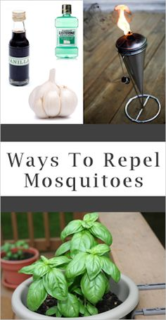 How to Prevent Mosquito Bites I like the natural way ~~~