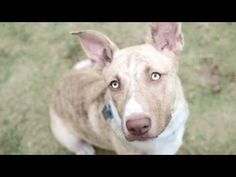 Remember Me Thursday - Pet Adoption Awareness Campaign