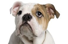 Pet Safety In and Around the Home