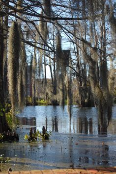 UL Swamp