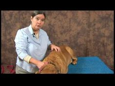 Acupressure for Arthritic Dogs : Dog Acupressure Massaging  Holding Points -    Massage or hold points for dog acupressure by using a circular motion or pressing deeply with your fingertips. Learn more about holding and massaging points   - http://massage.mynewsportal.net/2013/03/acupressure-for-arthritic-dogs-dog-acupressure-massaging-holding-points/