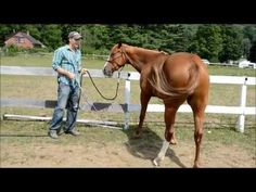 How To Teach A Horse To Side Pass - YouTube