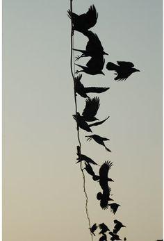 'Crow 104'   (photography: Meggan Gould)