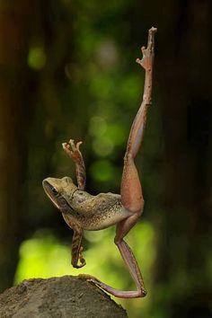 Ballet Dancer ballet dancers, dance moves, travel pictures, frogs, frog ballet, stretching, yoga, animal, honey