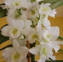 Plantas de interior on pinterest indoor water garden - Cuidar orquideas en casa ...