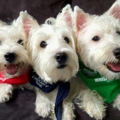 Famous Trio : Emma, Wesley and Bones!