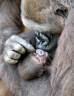 ✯ Taking Care of the Baby
