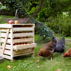 My hens love apples. This would be their idea of heaven!
