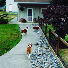 If your dog is an escape artist and you need to keep your dog from tunneling under the fence, you may need to install an underground barrier made of re-bar, chickenwire, or poured concrete. Here, a fence underlined with boards keeps these dogs from tunneling under the fence.