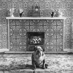 © Elliott Erwitt's Dogs, London, England, 1966, published by teNeues, www.teneues.com, Photo © 2008 Elliott Erwitt/Magnum.