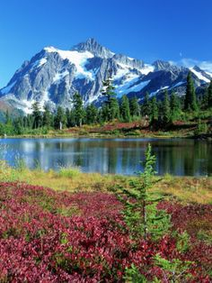Mt. Shuksan and Picture Lake, Washington