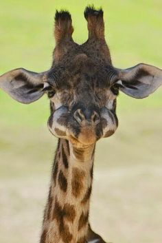 Be Happy and smile!! Cute Giraffes make anyone smile! :D