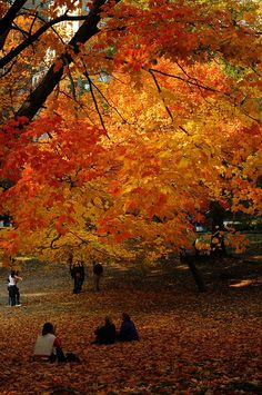 Fall in Central Park , NYC