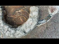 Hellenic mosaic of dragons and dolphins discovered in Southern Italy (Magna Graecia).