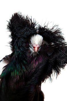 #Feathers Photo: David Degner