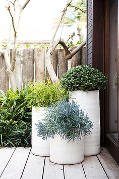 Keep it simple and make a statement outdoors. Layer pots planted with single plants in various hues and textures