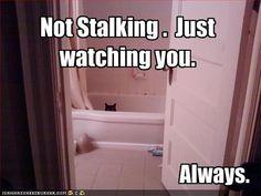 Not stalking. Just watching you... Always.