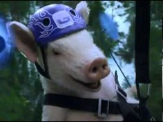 Maxwell the Pig Returns! Zip line Piggy   New GEICO Commercial   YouTube